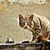 Wild Cat's Curiosity